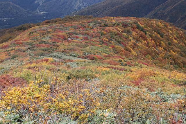南魚沼の紅葉が見頃を迎えております